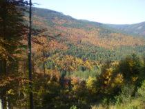 Podzimní rozjímání